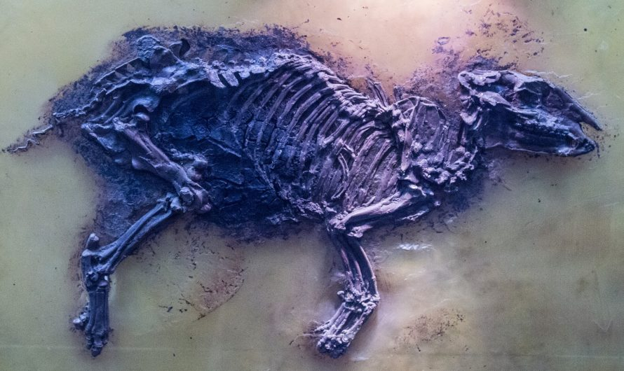 The Problem of Modern Contamination at Fossil Sites